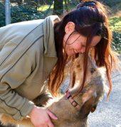 Qua la zampa, un aiuto agli animali abbandonati