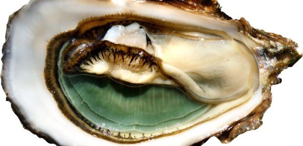 I Love ostrica, preziosissime perle di bontà